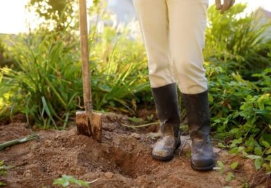 PLANT TREES IN SAFE SPOTS TO HELP PREVENT POWER OUTAGES AND FIRES